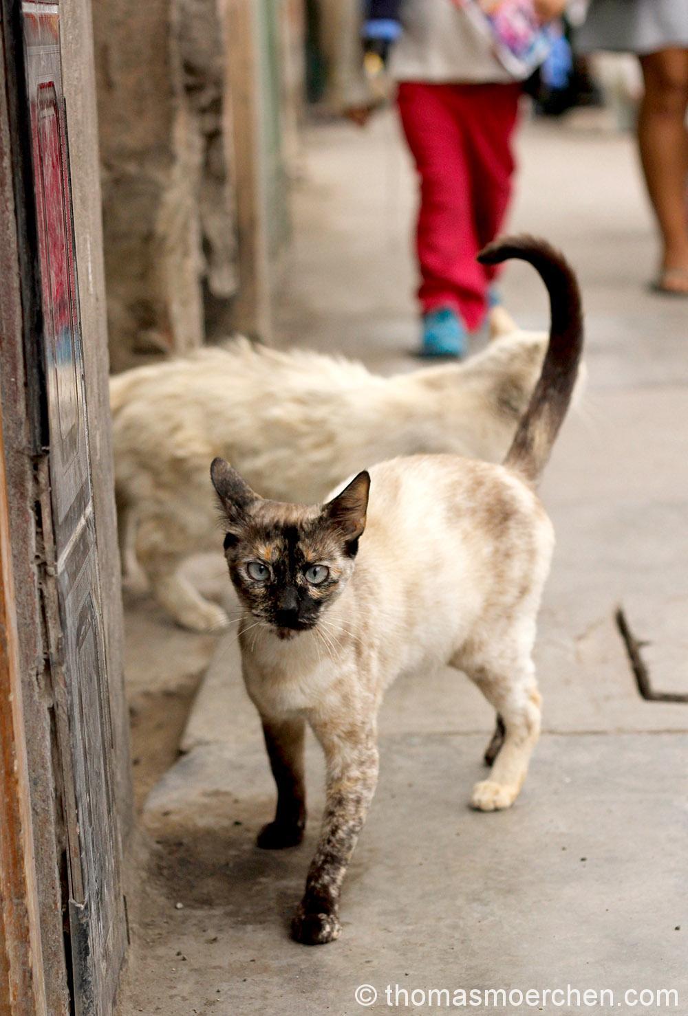 Wilde Tiere rennen überall in Lima umher. Besonders extrem viele Hunde sieht man täglich. Als ich dieses Foto aufgenmmen hab, hat mir währenddessen einer am Ohr rumgeschlabbert