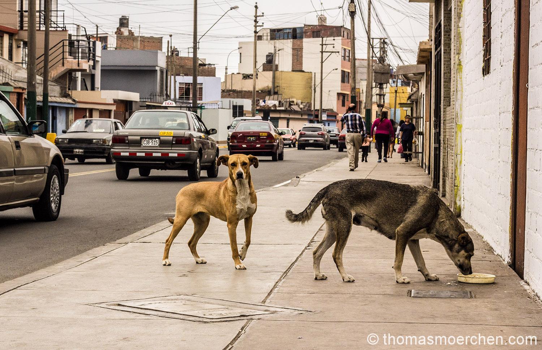 Gehören zum Strassenbild von Lima wie das Amen in der Kirche