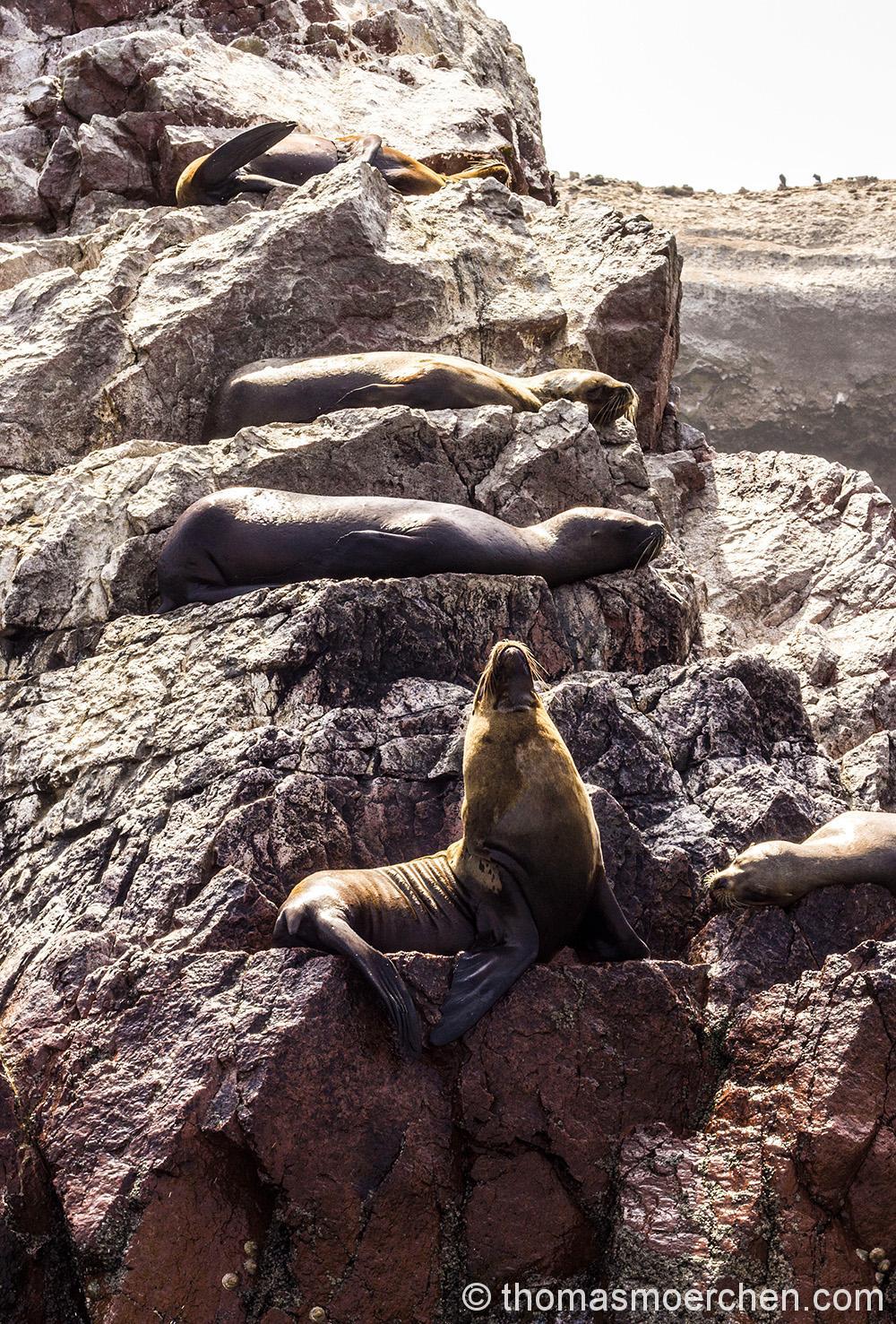 Hier hab ich die Robben gebeten sich einmal übereinander hiinzulegen